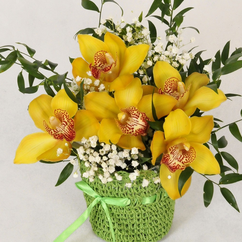 Storczyk - orchidea