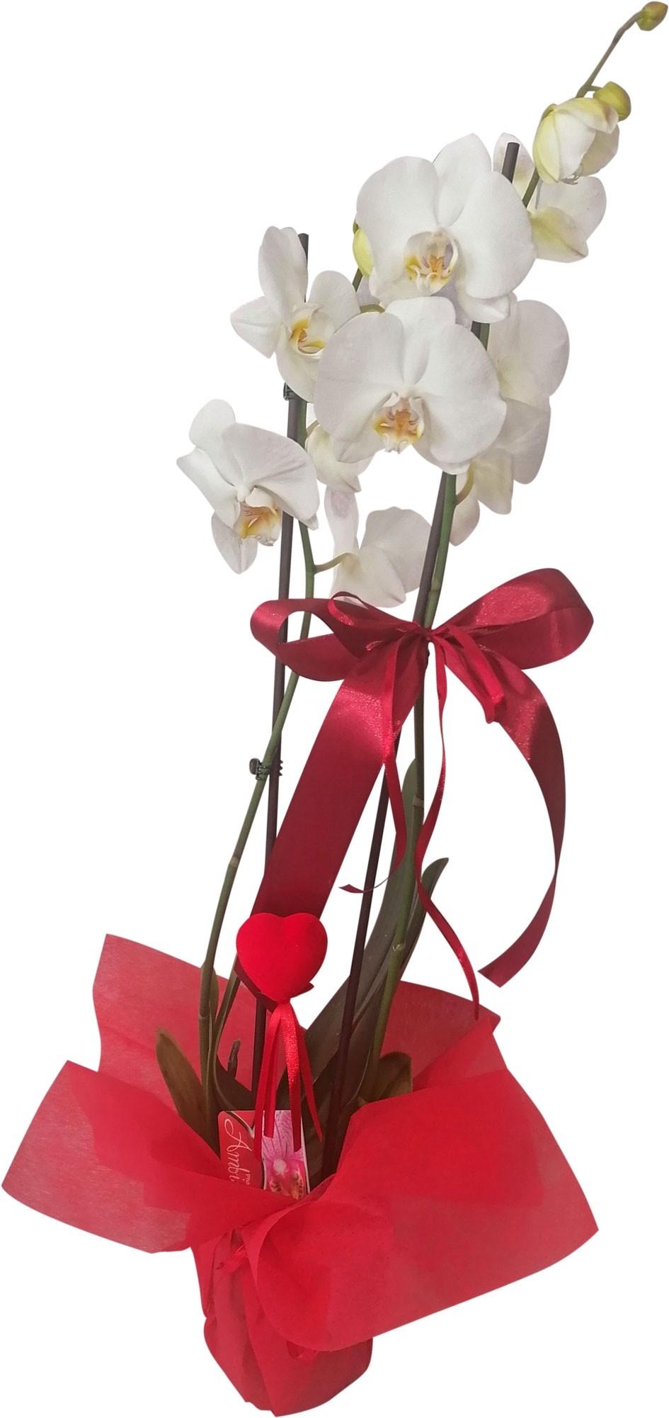 Orchidea miłości