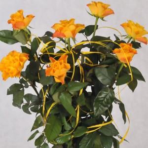 Bukiet z pomarańczowych róż