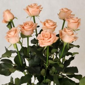 Bukiet 9 róż - łososiowy czar
