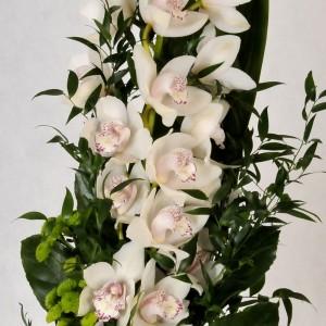 Dostojna Orchidea